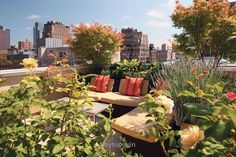 Look Up! The Coolest Rooftop Gardens In NYC  http://www.4mytop.win/2017/07/28/look-up-the-coolest-rooftop-gardens-in-nyc/