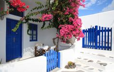 santorini-greece-flowers-santorini-gretsiia-dom-dvor-tsvety.jpg (596×380)