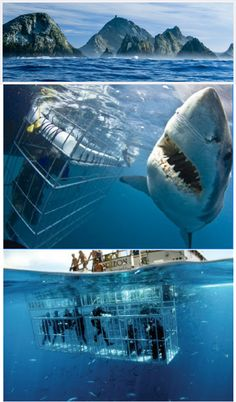 shark diving. I think Bobby would be scared but Id make him do it and like it.