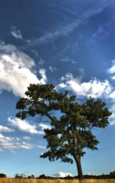 Tree Summer Trees, Summer Evening, Country Life, Around The Worlds, Clouds, Sky, Awesome, Photography, Museum