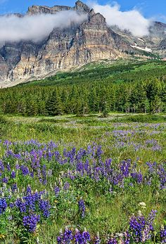 Glacier National Park; photo by Merilee Phillips