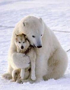 Una bella amistad