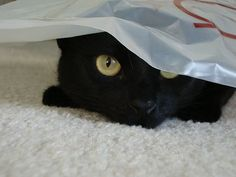 BOO!   Just Black Cats