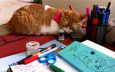 Alexa me acompaña siempre en labores de escritorio o manualidades.