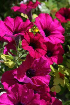 Lovely Deep Pink Flowers