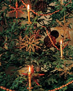 Christmas Glow: Delicate beeswax candles are clipped on the the sturdier branches of Martha's Christmas tree in Seal Harbor, Maine. They are only lit when people are in the room. Woodland Christmas, Christmas Past, Victorian Christmas, Primitive Christmas, Country Christmas, Vintage Christmas, Christmas Wreaths, Christmas Decorations, Holiday Decorating