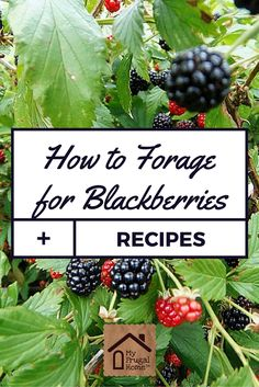 How to Forage for Blackberries + Recipes to Make with Your Haul