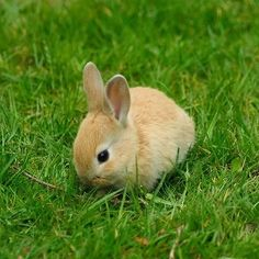 I plan to have a lot of different pets in the future. A rabbit is one of them.