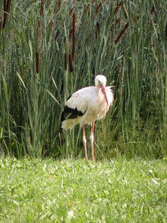 Parc à cigognes de Soultz / Wuenheim - #Alsace