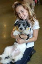 Bryant The Malti Poo is an adoptable Maltese Dog in Santa Monica, CA. Bryant is an adorableten month old maltese shitzu poodle. He is great with other dogs and fine with cats. We are looking for a h...