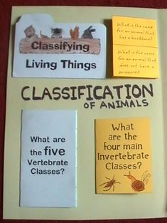 these are the five kingdoms of classification for living things science stuff pinterest. Black Bedroom Furniture Sets. Home Design Ideas
