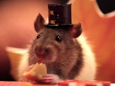 Share Thanksgiving with Tiny Hamster!