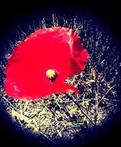 Red Poppy Flower art Poppy Flowers, Red Poppies, Flower Art, Celestial, Outdoor, Outdoors, Art Floral, Outdoor Games, The Great Outdoors