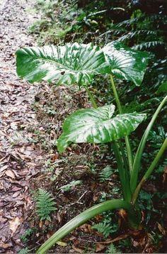 Australian Plants, Australian Garden, Red Fruit, Summer Flowers, Native Plants, Garden Design, Flora, National Parks, Crown