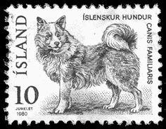 Icelandic Sheepdog website