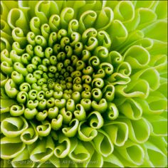 spirals in nature | Small Spirals by Ian Grainger | Fantastic Nature