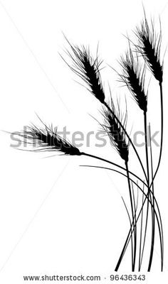 stock vector : illustration with wheat silhouettes isolated on white background