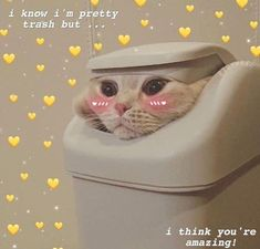 Crying cat meme Poster Click the Photo For More FUNNY and Cute Cat Videos and Photos 15 Hilarious Reasons Why Every Cat Owner Must Get A Glas. Kittens Cutest, Cats And Kittens, Cute Cats, Funny Cats, Cute Cat Memes, Cute Love Memes, Funny Memes, Cute Baby Animals, Animals And Pets