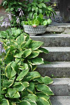 Garden Design, Succulents, Plants, Farmhouse, Succulent Plants, Landscape Designs, Plant, Planets, Yard Design