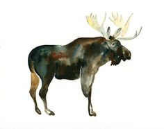 MOOSE Original watercolor painting 10x8inch by dimdi on Etsy