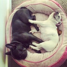 #w33daddict #dogs
