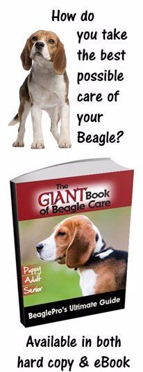 Here you will find cute Beagle poems, fun Beagle sayings, Beagle quotes, free animated Beagle clip art and the top 40 most popular Beagle items.