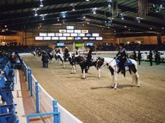 Calsonic Arena, home of the Tennessee Walking Horse National Celebration, Shelbyville, TN