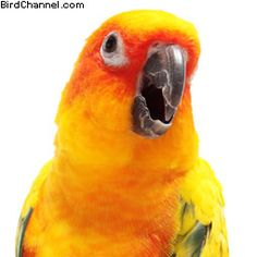 Ways To Prevent Screaming In Pet Birds