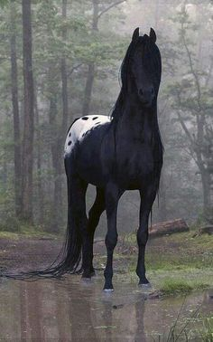 This is one of the most beautiful Appaloosa horses I have ever seen! Treville's…This is one of the most beautiful Appaloosa horses I have ever seen! Animals And Pets, Baby Animals, Funny Animals, Cute Animals, Pretty Animals, Nature Animals, All The Pretty Horses, Beautiful Horses, Animals Beautiful