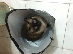Cláudia na sacola...