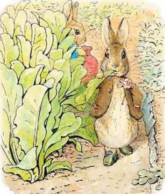 helen beatrix potter peter rabbit illustrations - Google Search