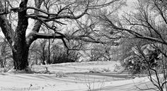 """Fresh Snowfall / Evocative Winter Scene / Landscape / Fine Art Photography Print. """"Fresh Snowfall"""" captures the stillness & solitude following an overnight snowstorm that left a blanket of snow on the ground & sugar-coated the leafless tree limbs & bushes. Photographed in the morning along the shoreline of Lake Ontario (one of the Great Lakes)."""