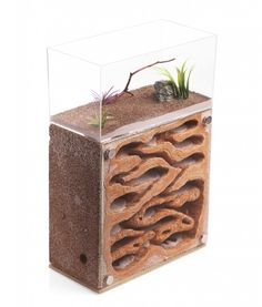 Tower Nucleus, 8x8 – Tar Heel Ants