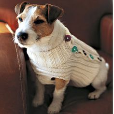 Knit a dog sweater and add some funky buttons