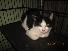 GORDON HAS BEEN RESCUED BY SUZY'S ZOO FELV SANCTUARY