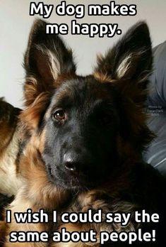 227 Best German Shepherd Quotes Images On Pinterest German