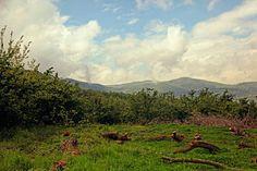 Arkabahce manzarası