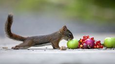 Between two apples by Andre Villeneuve / 500px