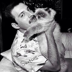 Freddie Mercury – was a British singer-songwriter and producer. As the frontman of Queen, Freddie Mercury was one of the most ta. Queen Freddie Mercury, Fred Mercury, Celebrities With Cats, Celebs, Son Chat, Queen Band, Killer Queen, Cat People, Kitty Cats