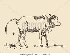 Find Sketch Cow Head Isolated Vector Illustration stock images in HD and millions of other royalty-free stock photos, illustrations and vectors in the Shutterstock collection. Thousands of new, high-quality pictures added every day. Cow Illustration, Cow Head, Pencil Drawings, Moose Art, How To Draw Hands, Royalty Free Stock Photos, Poster, Animals, Dibujo