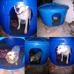 Casinha de cachorro caixa d' água