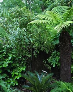 London-garden-rain-forest-black-bamboo-New-Zealand-ferns