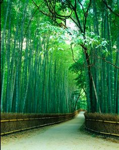 The bamboo road..