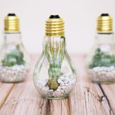 Turn Light Bulbs Into Terrariums wit this Step-by-Step - Before After DIY Light Bulb Plant, Light Bulb Terrarium, Terrarium Diy, Before And After Diy, Plant Projects, First Apartment Decorating, Summer Diy, Diy For Teens, Diy Room Decor
