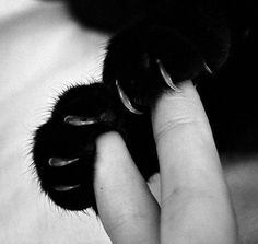 Cat paws -- why does it feel so good to put my fingers in there?? Maybe because it is one of the very few places Shoosh lets me touch her!!