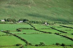 Ireland, no fences just hedges to divide the pastures