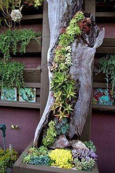 Love this succulent sculpture