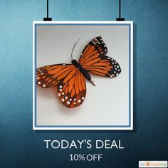 Today Only! 10% OFF this item.  Follow us on Pinterest to be the first to see our exciting Daily Deals. Today's Product: Orange butterfly hairclips Brett hair assessor Buy now: https://www.etsy.com/listing/242010116?utm_source=Pinterest&utm_medium=Orangetwig_Marketing&utm_campaign=Summer_sale   #etsy #etsyseller #etsyshop #etsylove #etsyfinds #etsygifts #musthave #loveit #instacool #shop #shopping #onlineshopping #instashop #instagood #instafollow #photooftheday #picoftheday #love #OTstores…