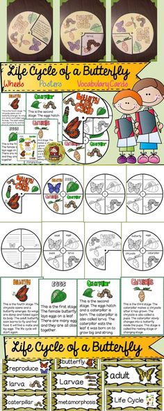 The activity wheels, posters and vocabulary cards will make teaching this science unit on the Life Cycle of a Butterfly fun, quick, and easy.
