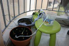 На Кипре: Физика в быту или как полить цветы